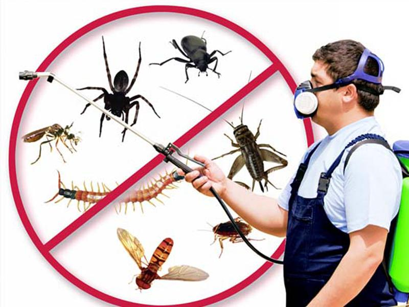 Ways to Pest Proof Your Home