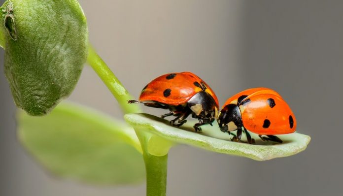 Bugs And Insects To Enter Your Home