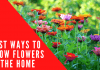 how to grow flowers in home