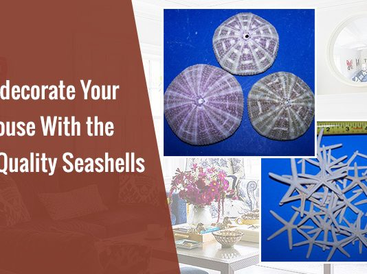 wholesale seashells in bulk